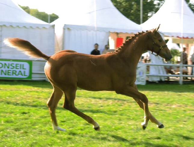 Vinka's champion des foals